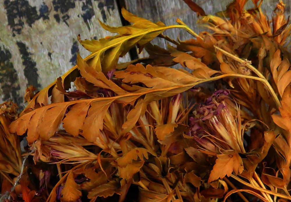 Dying Bouquet Photography Art | Dan Katz, Inc.