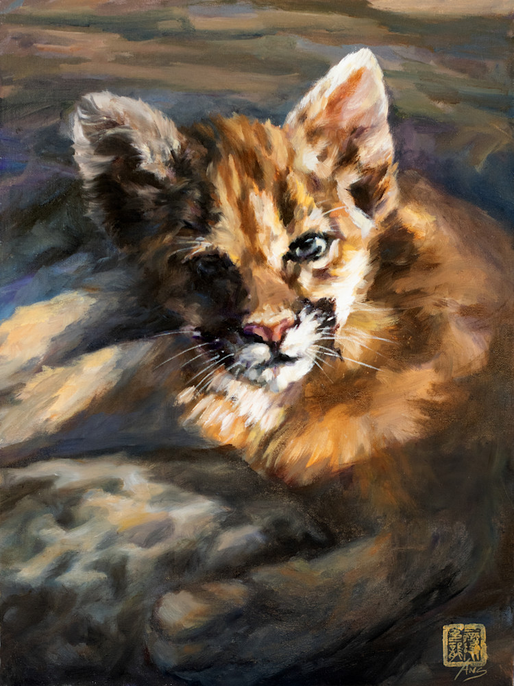 Cougar cub in the sun, oil on linen by Ans Taylor, now available as art print on canvas, paper or metal