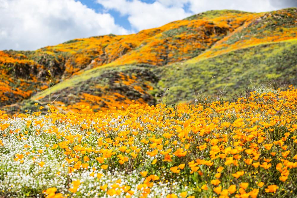 Poppy Mountain Photography Art   Rosanne Nitti Fine Arts