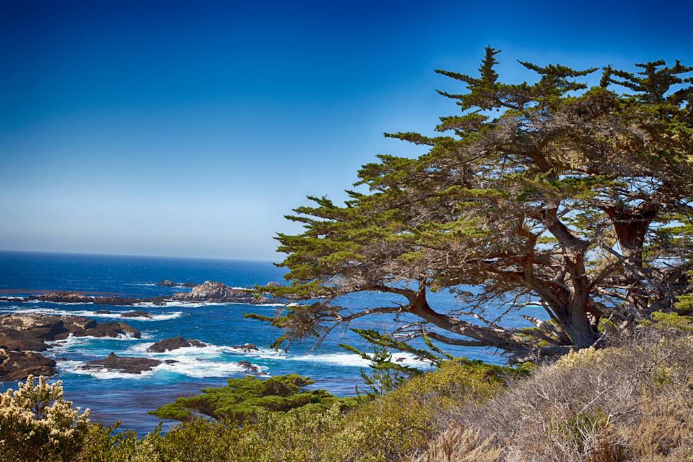 Point Lobos 1 Photography Art   Rosanne Nitti Fine Arts
