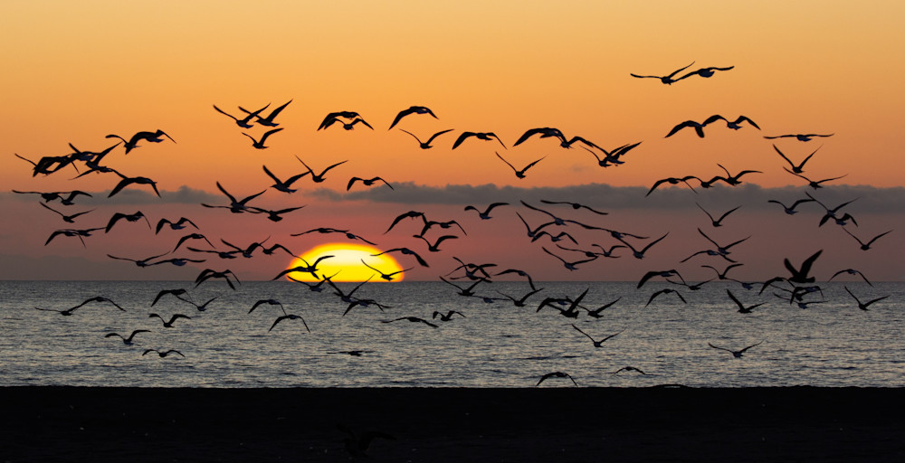 Sunset And Gulls Oxnard Photography Art | Dan Katz, Inc.