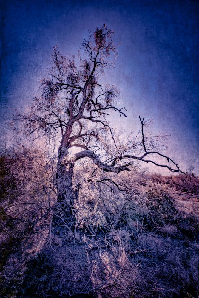 Old Man Winter Blues Photography Art | Carol Brooks Parker Fine Art Photography