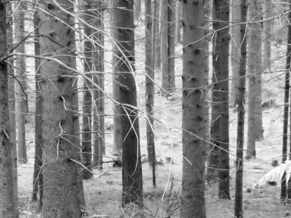 Grey Forest Photography Art | Ron Olcott Photography