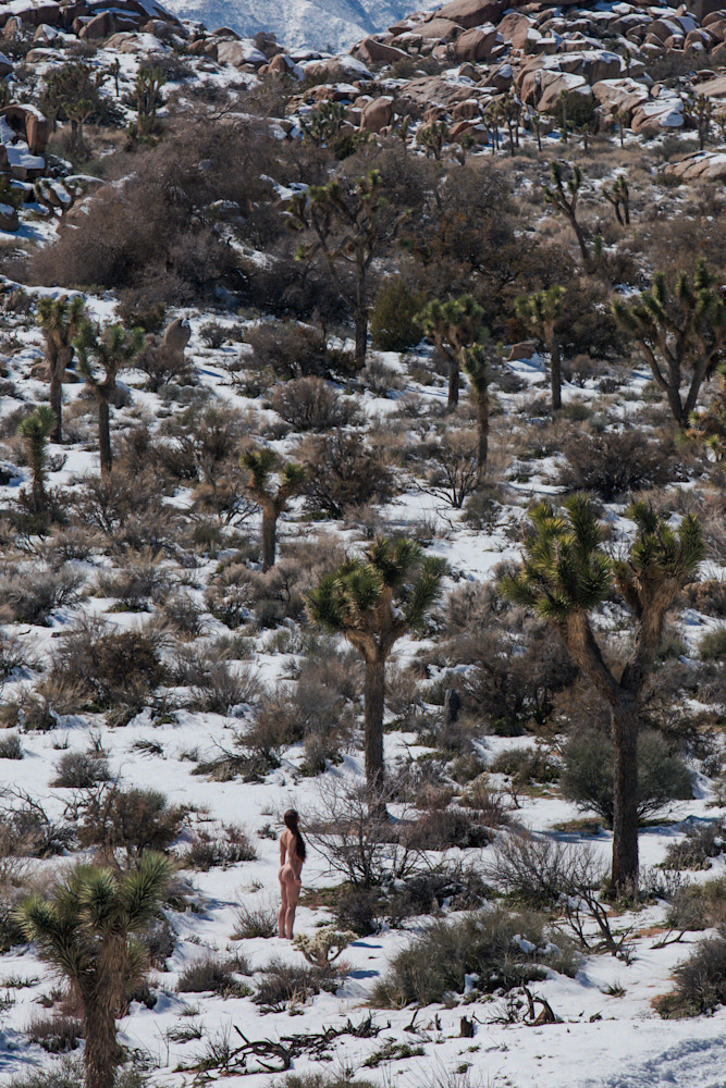 Desert Winters