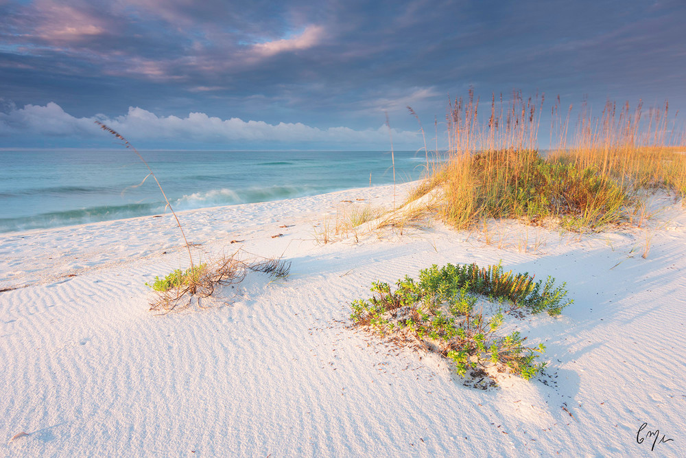 Constance Mier Florida nature photography - beautiful images from Florida's gulf coast