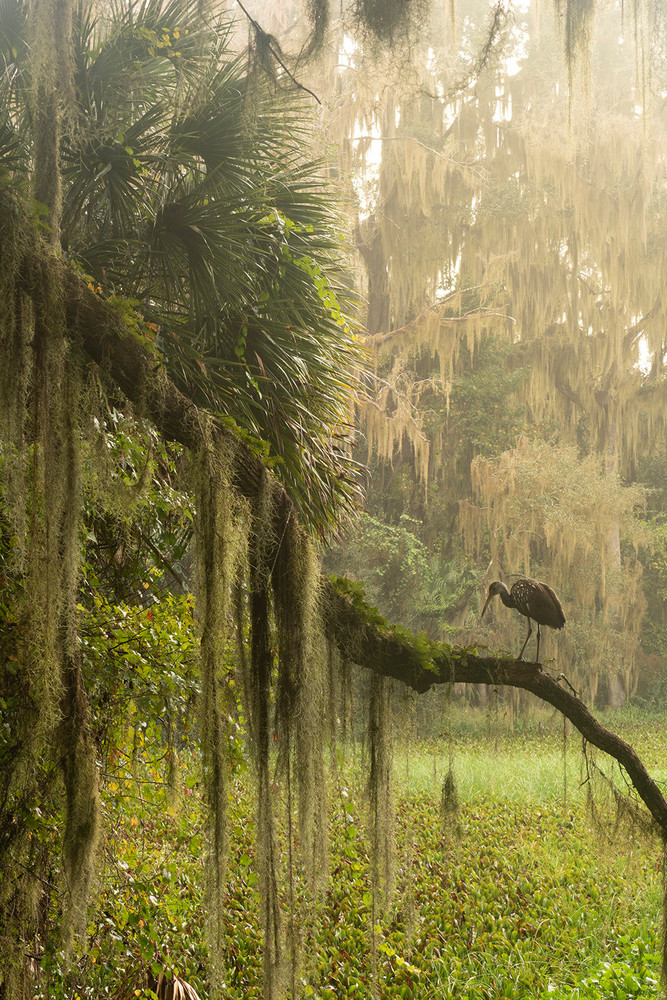 Constance Mier  fine art nature photography - capturing beautiful scenes of Florida's wild landscapes