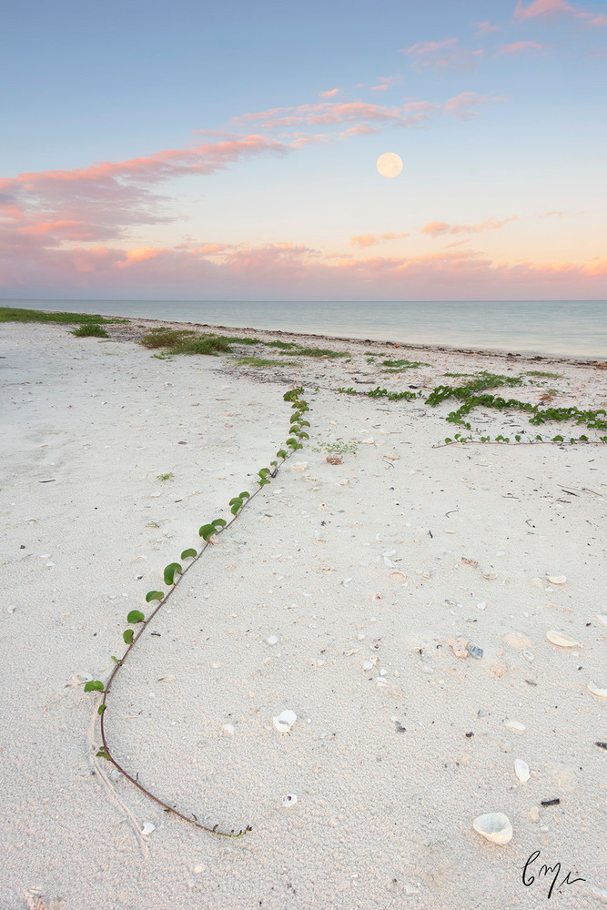 Constance Mier Everglades Photography - unique images from Florida's gulf region known as the Ten Thousand Islands