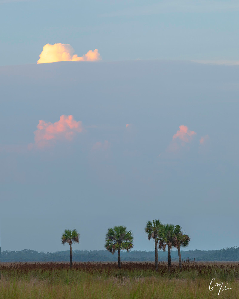Constance Mier everglades photography - beautiful landscape scenes from Florida's wilderness areas