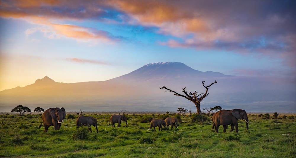 A Tusker's Dawn