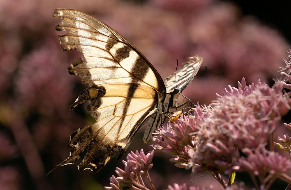Butterfly On Floral - Macro Photography by Bill Van der Hagen