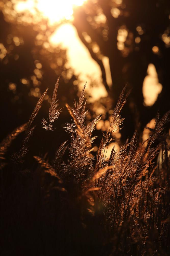 Prairie Grass At Sunrise - landscape photography by Bill Van der Hagen