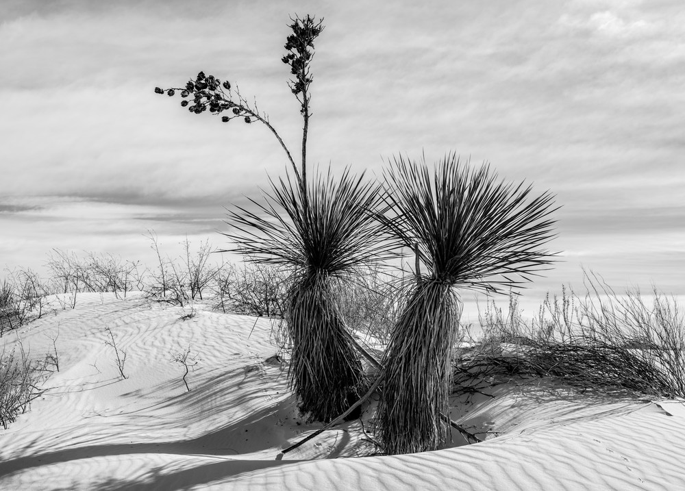 White Sands, Nm #12 Photography Art | Kit Noble Photography