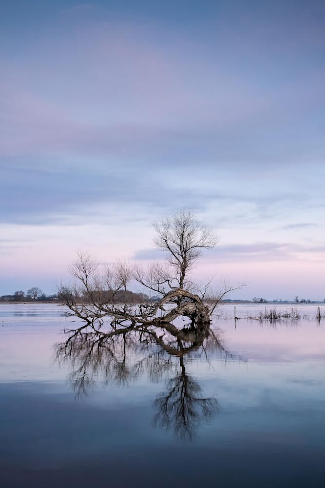 Flooded Morning Sunrise  in South Dakota - Tree Reflection Photo