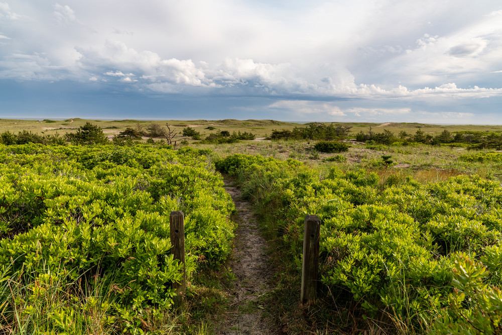 Surfside Beach Path #2 Photography Art | Kit Noble Photography