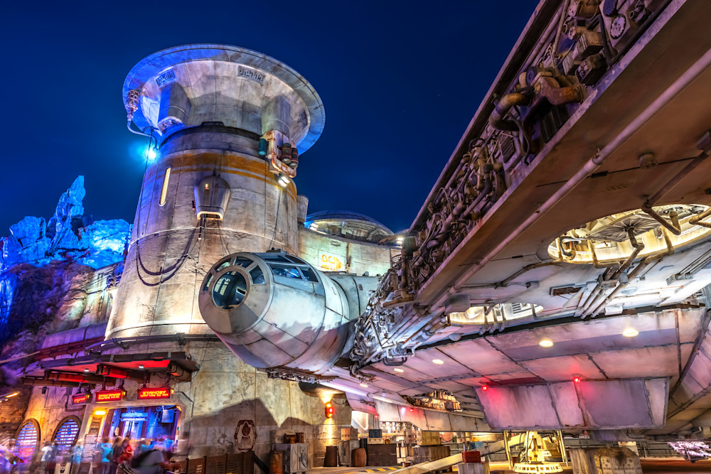 Batuu And The Falcon Photography Art | William Drew Photography