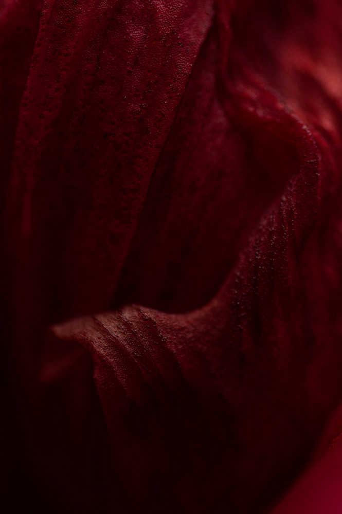 Red Satin Photography Art | Kathleen Messmer Photography