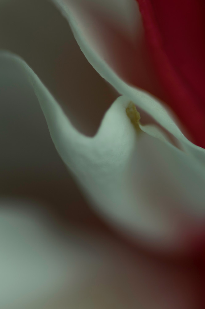 In Red Photography Art | Kathleen Messmer Photography