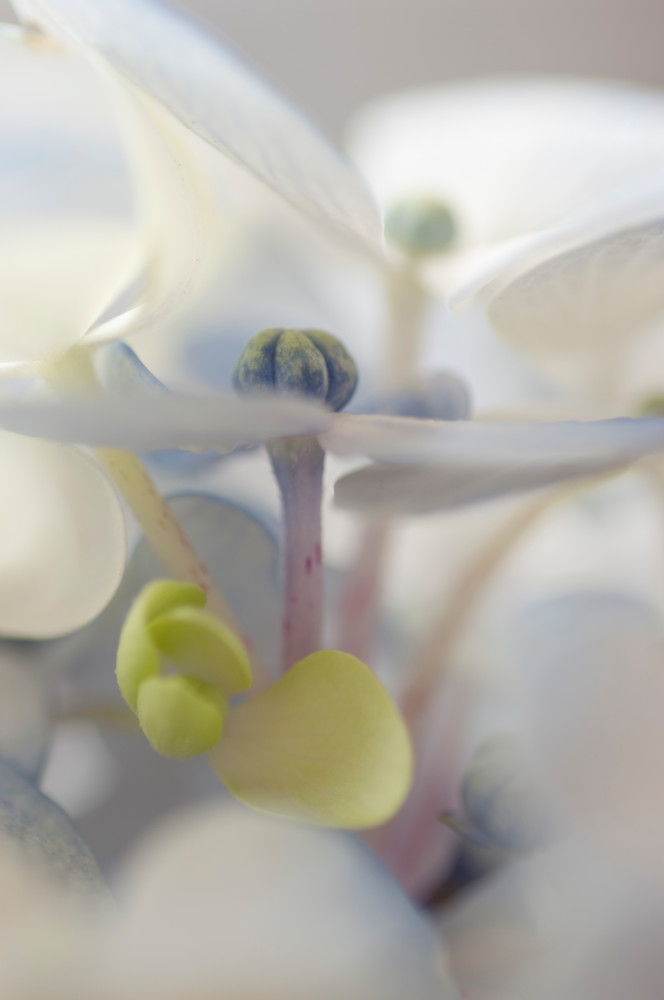 Under The Eaves Photography Art | Kathleen Messmer Photography
