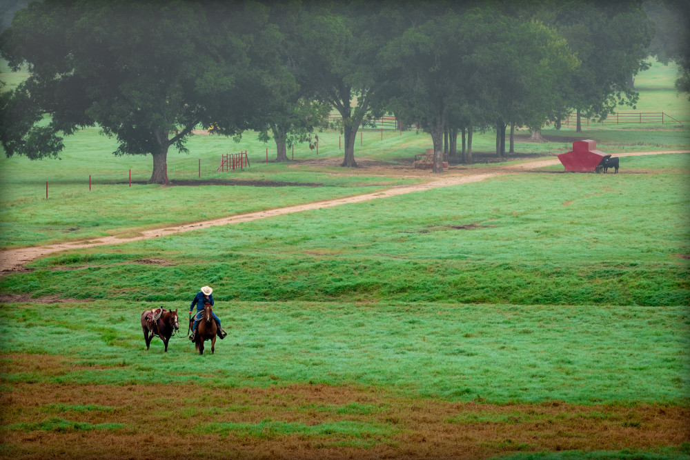 Cowboy leading horse home at the end of the day past a red outbuilding in the tree field