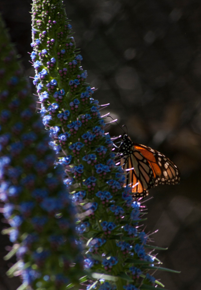 Monarch Butterfly Photography Art | Kathleen Messmer Photography