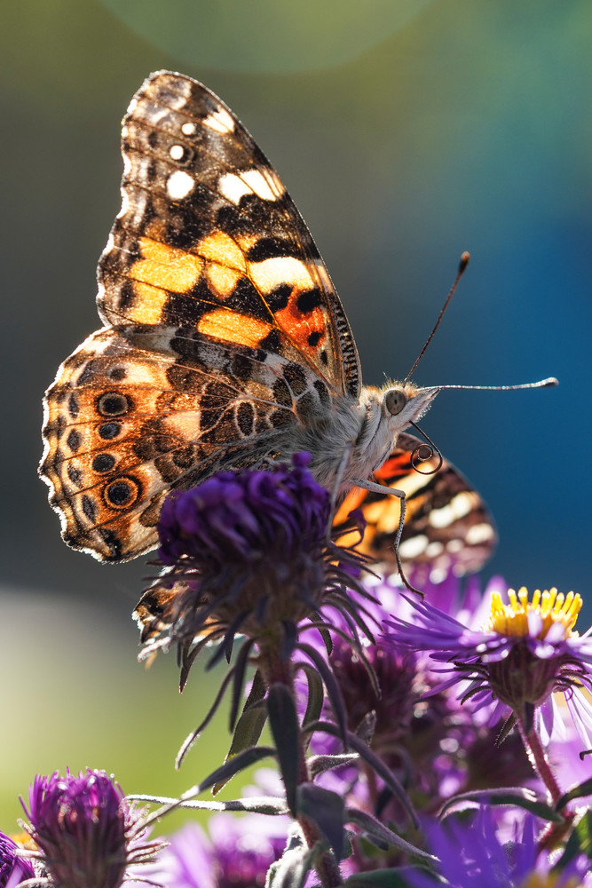 Colorful Butterfly & Floral Macro Photography