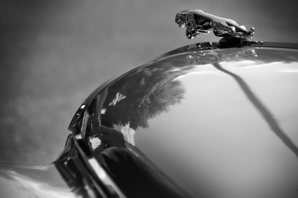 Dark Beauty of Jaguar Hood Ornament