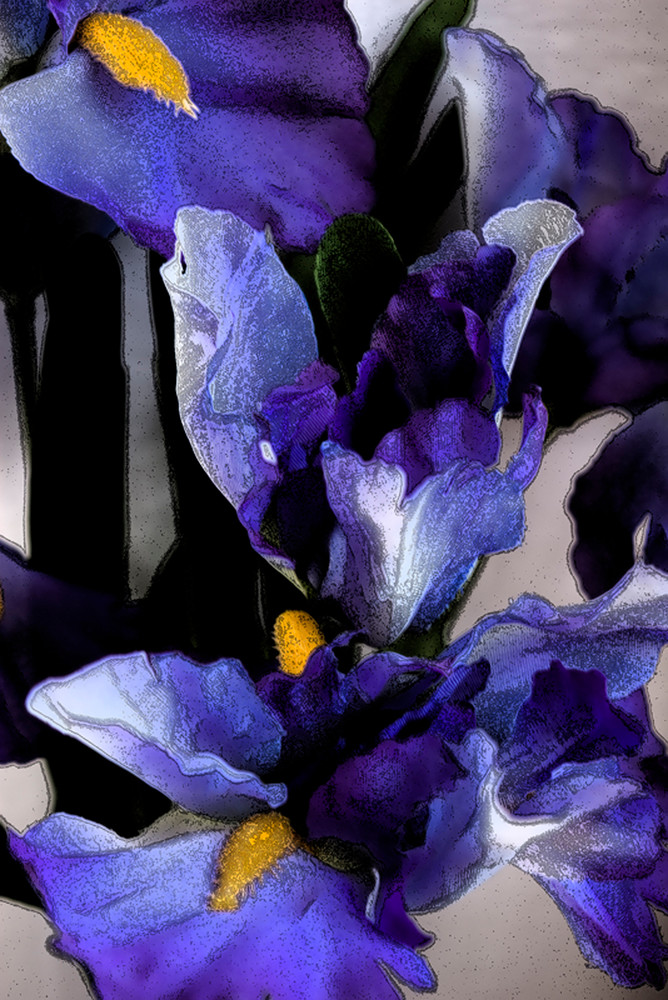 Irises Photography Art | Kathleen Messmer Photography