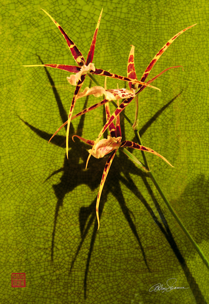 Gilded Urchin  Photography Art | cosimo scianna