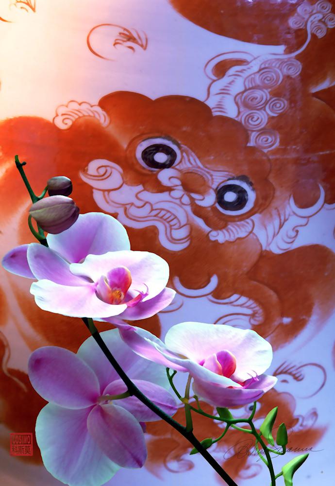 Ancient Dream Photography Art   cosimo scianna