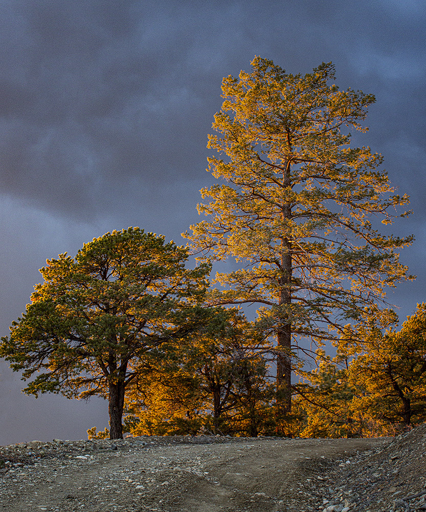 Sunset Trees Art | Fine Art New Mexico