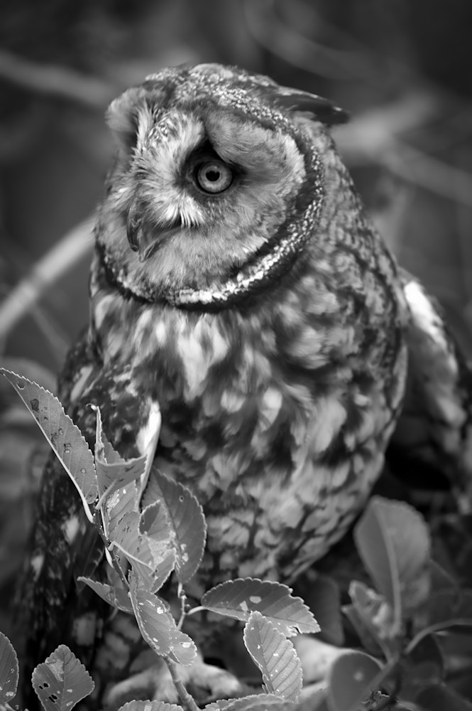 Surprised Photography Art   Kathleen Messmer Photography