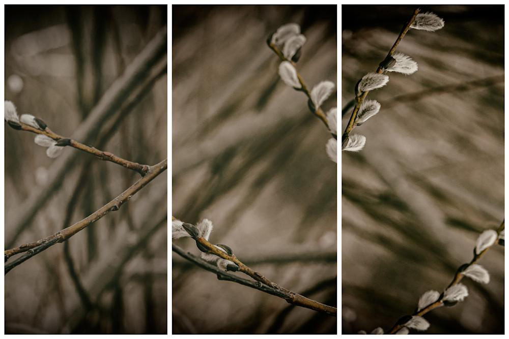 Triptychs | Fine Art Photographs | Nathan Larson | Commercial Photographer