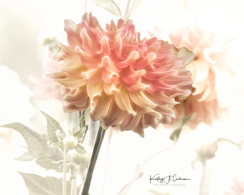1122025 Copy Photography Art | Images2Impact