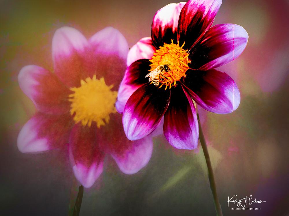 1122057 V2 Photography Art | Images2Impact