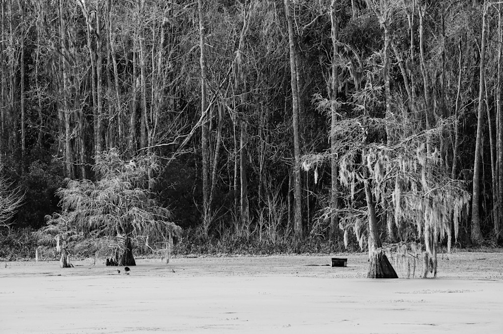 Swamp in black and white