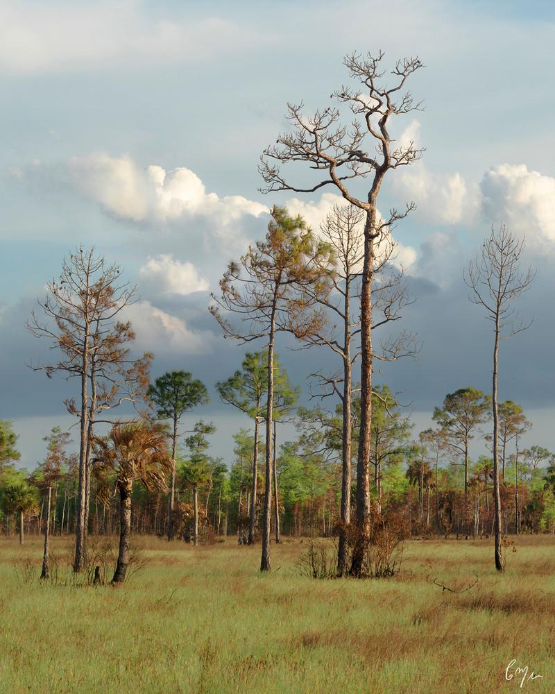 Constance Mier Everglades Photography - fine art nature prints