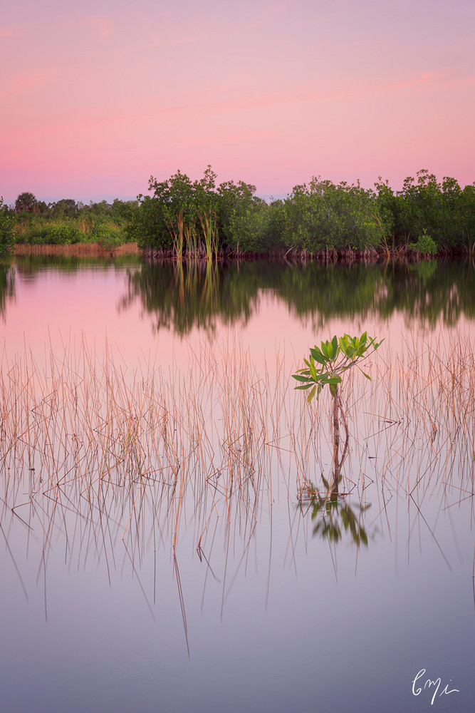 Constance Mier fine art photography from south Florida wilderness areas