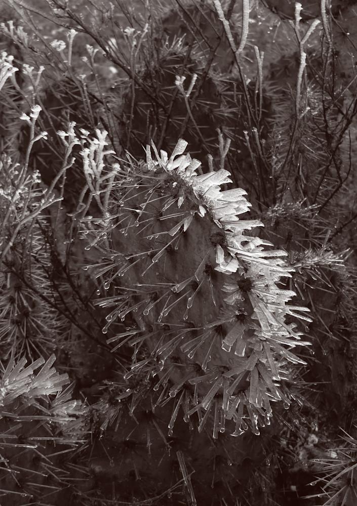 Ice Thorns Photography Art | Galeria Mañana