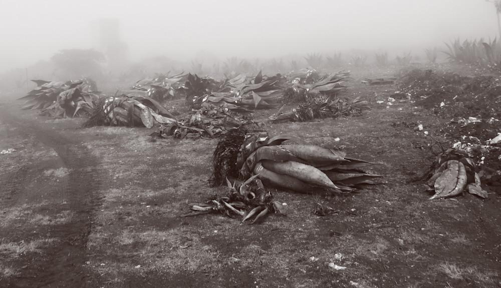 Maguey Death Photography Art | Galeria Mañana
