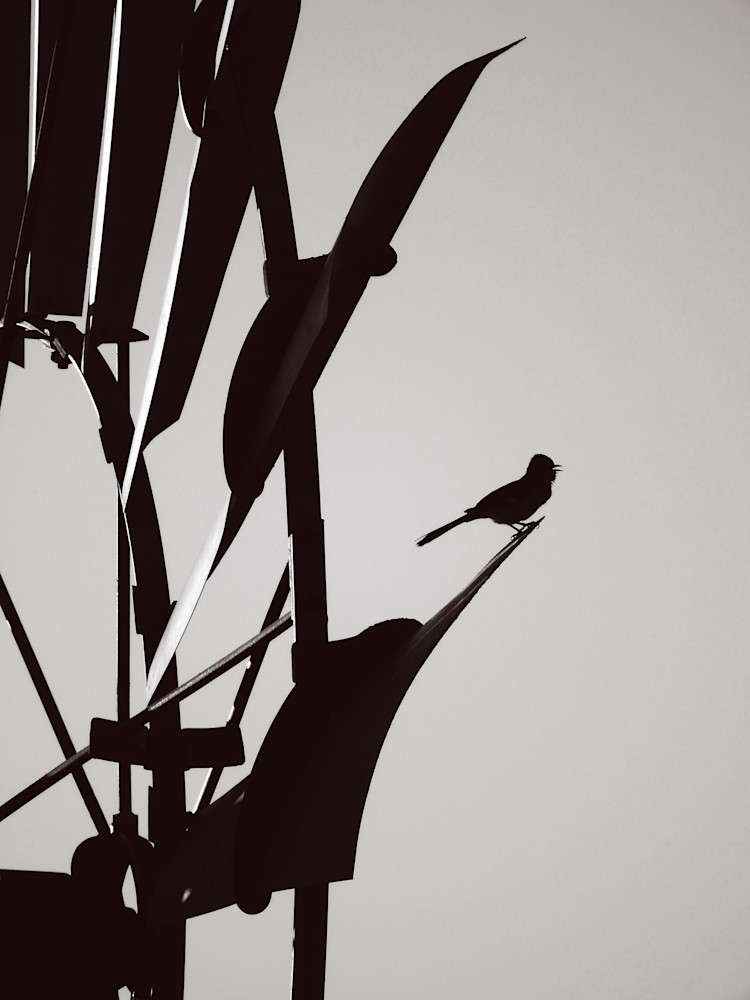 Bird On The Windmill Photography Art | Galeria Mañana