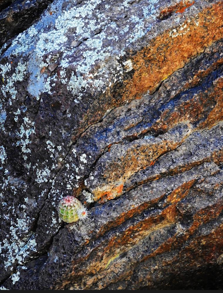 Madera Canyon Cactus On Rocks Photography Art | Galeria Mañana
