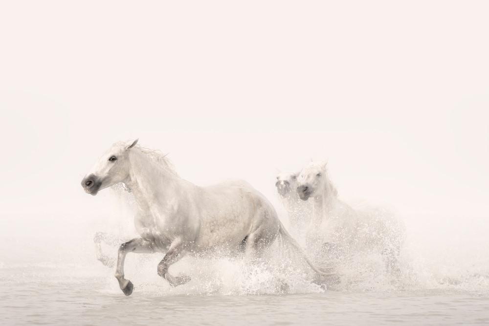Pegasus Photography Art | DE LA Gallery