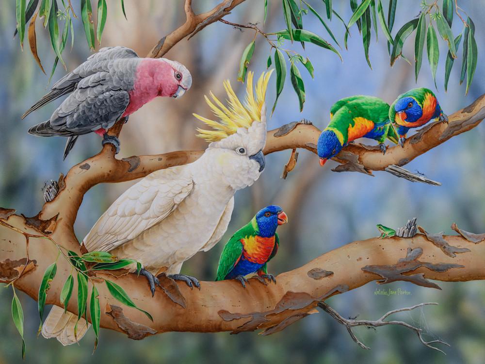 Colourful Crowd - Galah with Sulphur-crested Cockatoo, Rainbow Lorikeets and Eastern Dwarf Tree Frog   Australian Native Wildlife