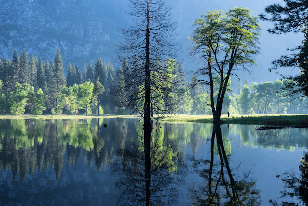 Morning Observer - Yosemite National Park landscape photograph print
