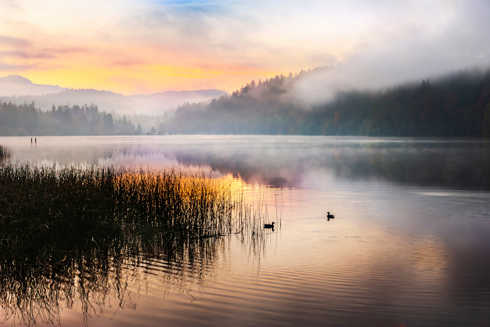 """Along the shores of Lake Padden near Bellingham, Washington there are prolific patches of thin freshwater reeds. I went there in the late fall with a plan to capture  images of these reeds displaying their delicate """"dance"""". I found that they were no"""