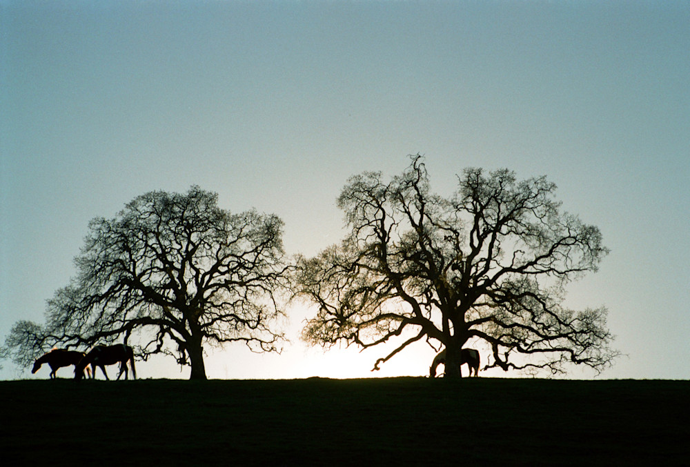Trees with Horses