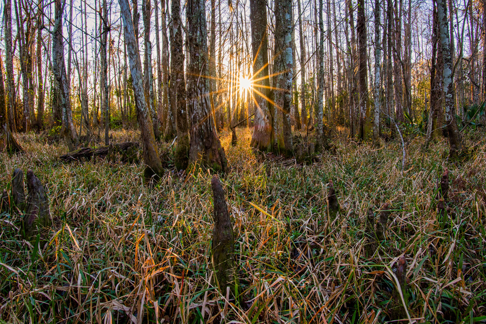 Sunset in the Tchefuncte River swamp - Louisiana photography prints