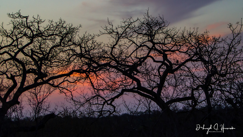 """Tangled Trees at Sunset"". Photodiscoveries"