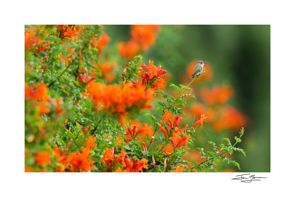 Hummingbird with flowers available for your home.