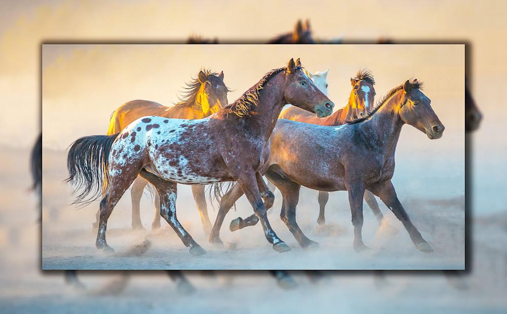 Appaloosa Running Pano 3 D Photography Art | Whispering Impressions